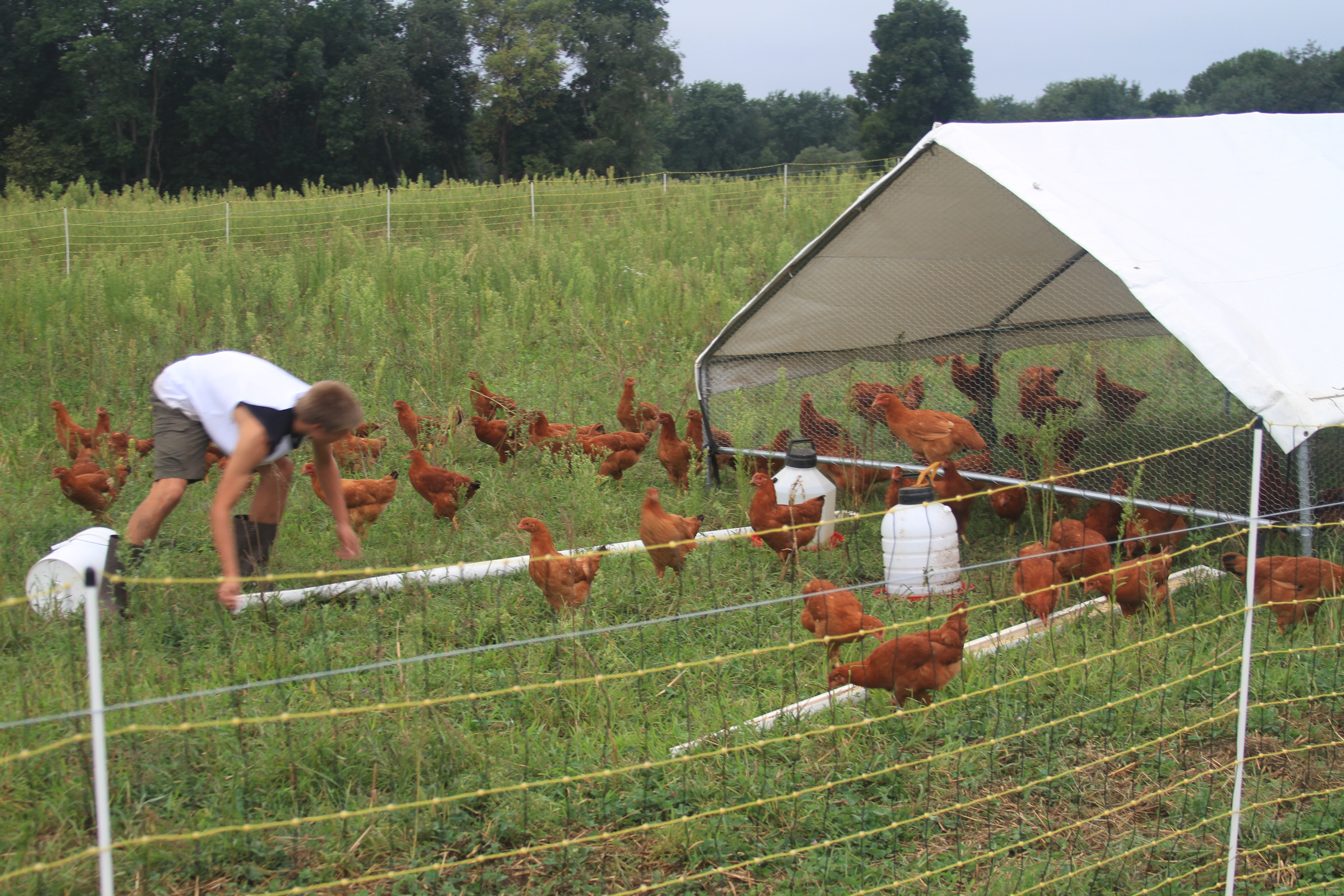 2011 Egg And Chicken Ordering Steve Normanton Grass Fed Beef