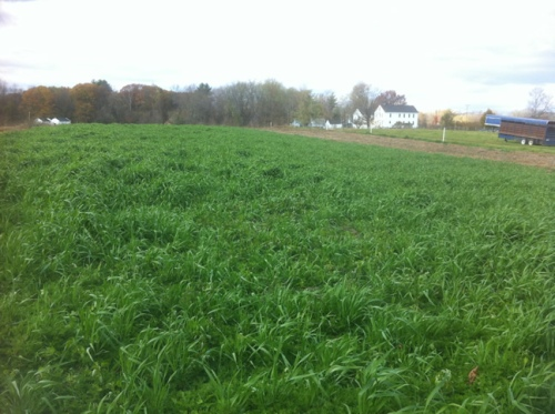 oats and vetch